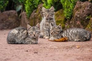 KD_1343: Northern India - Cats