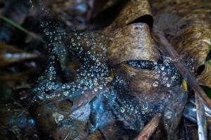 LC_0167: Laos - Cobweb in the jungle