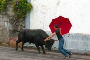 AZ_0151: Azores - Toreada à corda