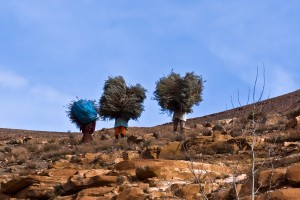 KA_0711: Morocco - Peasants carrying fagots