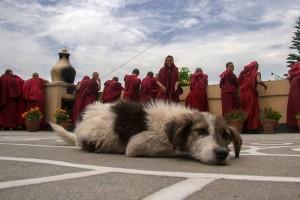 NE_0939: Nepal - Serenity in the Monastery