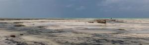 PAN_Jambiani: Tanzania - Low tide in Zanzibar