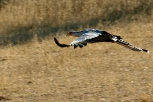 SN_0546: Namibia - Serpentario