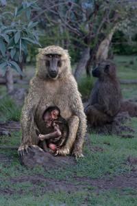 TA_0107: Kenya - Maternity