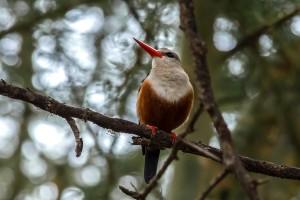 TA_0012: Tanzania - Woodpecker